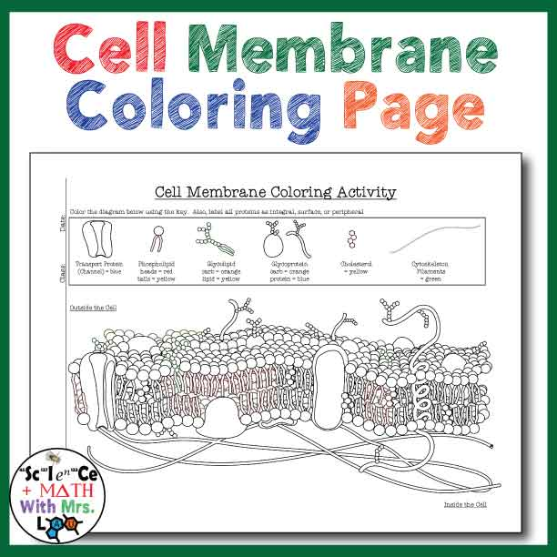 free the cell membrane coloring pages. Black Bedroom Furniture Sets. Home Design Ideas