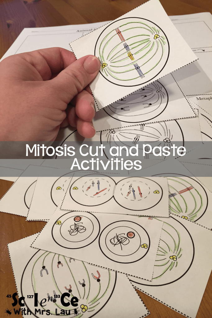 Mitosis Cut and Paste Activities